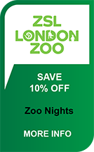 London Zoo Nights